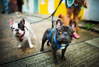 Condomínio pode proibir animais?